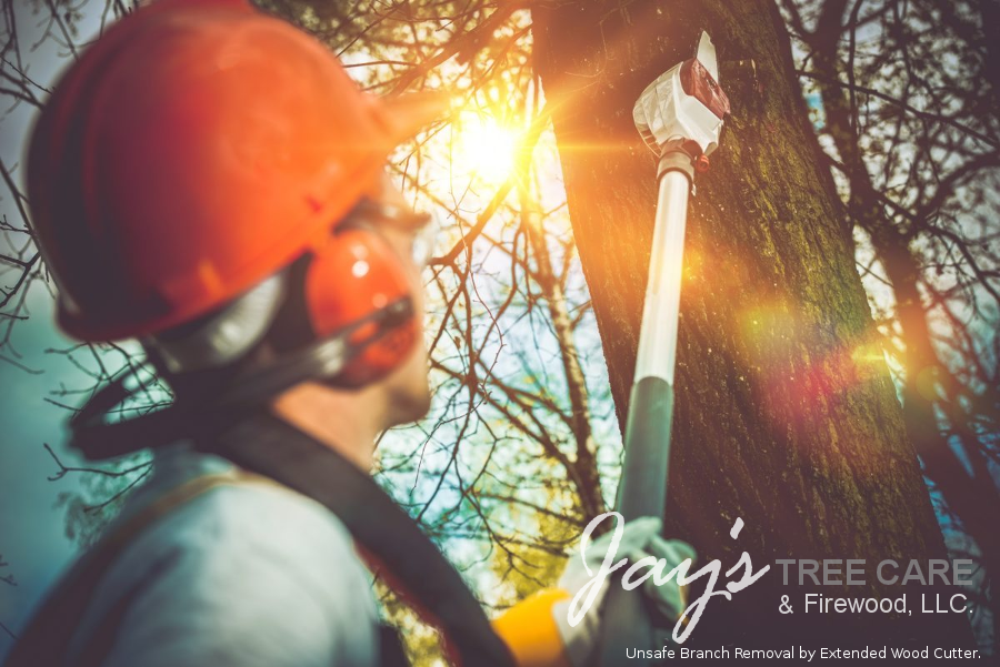 Tree Care Services Twin Cities - - Minneapolis -- Unsafe Branch Removal by Extended Wood Cutter.